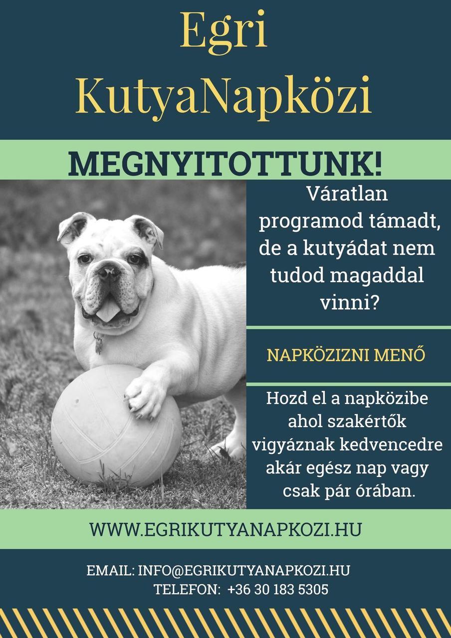 Kutyanapközi 1